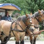 Met de paarden mee.